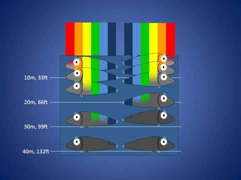 Fishing Lure Colors Pt 3: How Waves Affect Lure Color Visibility