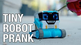 Pranking With The Little Robot 'MiBro'