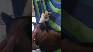 고양이 2마리 있는 집에 해먹을 설치하면 안되는 이유 …