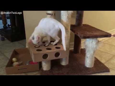 Anakin The Two Legged Cat, Arya, Trixie, Pixie and Mika, Collection of Clips