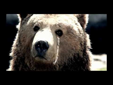 Campanie 2% - WWF (World Wide Fund for Nature) Romania