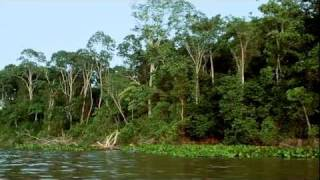 Video Cruzando el Amazonas download MP3, 3GP, MP4, WEBM, AVI, FLV November 2017