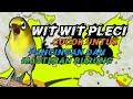 Masteran Witwit Pleci Dan Terapi Air  Mp3 - Mp4 Download