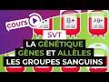La génétique : Gènes et allèles, l'exemple des groupes sanguins - SVT - digiSchool