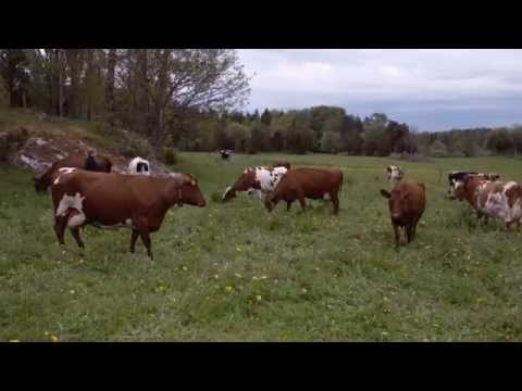 """""""Welcome to the land of organic milk"""" (Swedish milk commercial)"""