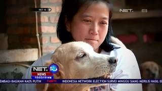 Pejaten Shelter Merawat Hewan yang Ditelantarkan - NET 10