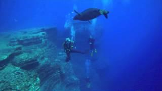 Niihau - Hawaiian Monk Seal