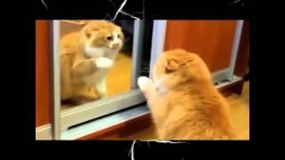 Опять про любовь Смешное видео Смешные животные
