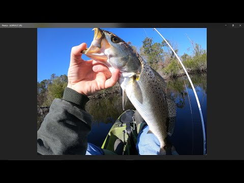 Winter Speckled Trout In North Carolina