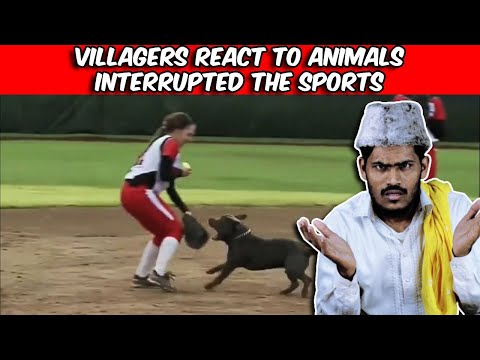 Villagers React To Most Unexpected Animal Interference Moments in Sports | Tribal People Try