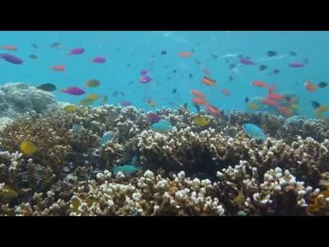 Sven Lindblad: South Pacific Marine Conservation Area