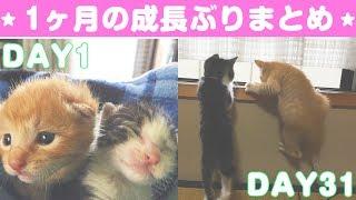 祝一ヶ月!赤ちゃんネコから子猫へと成長したきなことあずき☺  自分で言...
