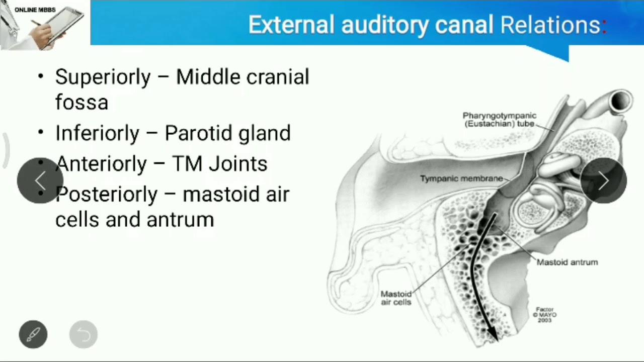Anatomy of The Ear _ ENT _ Otorhinolaryngology _ Anatomy ...