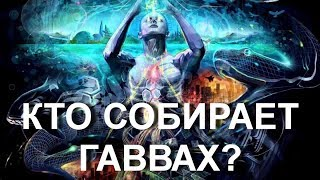 Кто и для чего собирает Гаввах 6000 лет? (16.02.19...