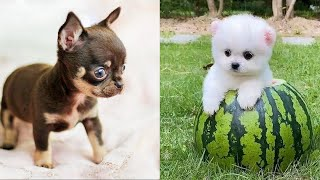 Baby Dogs - Cute and Funny Dog Videos Compilation #31 | Aww Animals