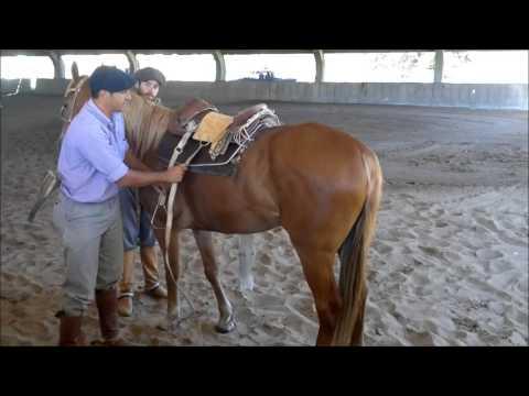 Curso Corrección defectos de doma y equitación campera para campo y pruebas funcionales