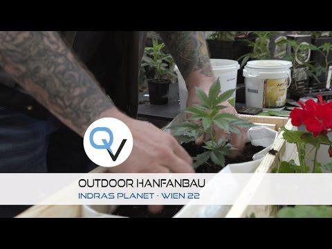 Outdoor Hanfanbau in BIO wie es funktioniert