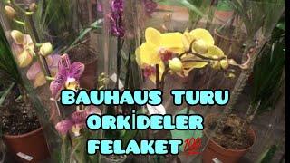 BAUHAUS TURU ORKİDELER FELAKET GÜZEL💯❣️🙋♀️/ Ebrunun Denizi Orkide Olan Heryerde