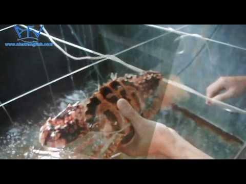 Nhatrang Fish Products || lobsterafv.com