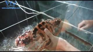 Nhatrang Fish Products || Nhatrangfish.com