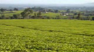 Kenyan Tea Plantation