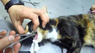 Не кормите кошек рыбными костями!!!