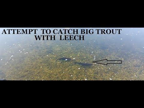Attempt To Catch Big Trout With Leech DAY1