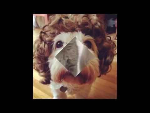 ПОРОДЫ СОБАК. Собаки - каталог пород собак России