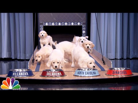 Puppies Predict Super Bowl 50