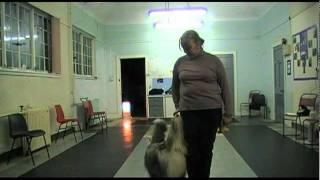 Gertie - Puppy Training