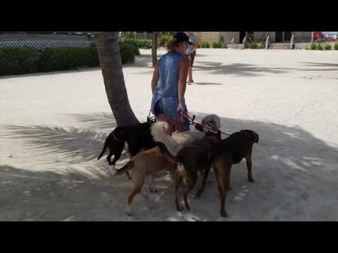 Belize Dealing with Difficult Dogs Dog Training