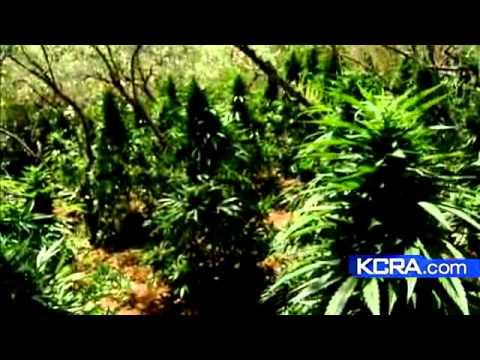 Law Enforcement Marijuana Bust Spans 6 Counties