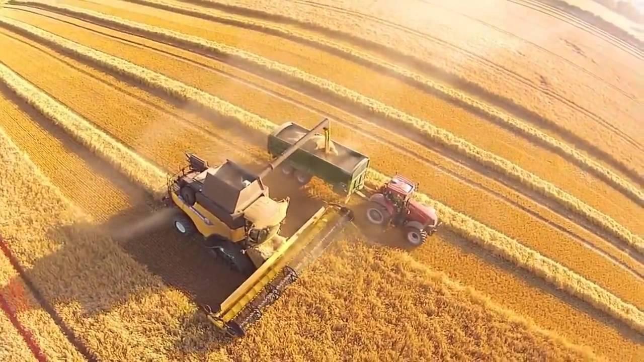 buğday hasadı ile ilgili görsel sonucu