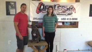 Testimonial For Pit Bull, Basic And Advanced Lessons! Dog Obedience Training In Northern Virginia
