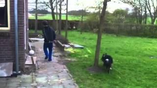 Heading dog