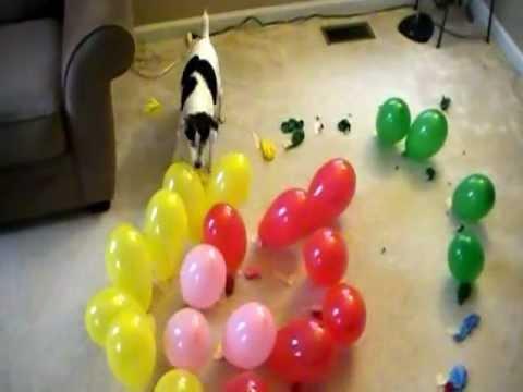 DOG vs. BALLOONS V, SPIRAL OF DEATH