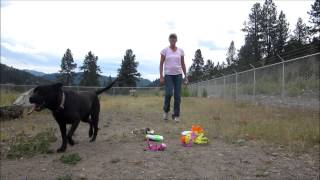 Sally, Labrador Retriever/pit Bull Mix For Adoption At Forget Me Not Animal Shelter