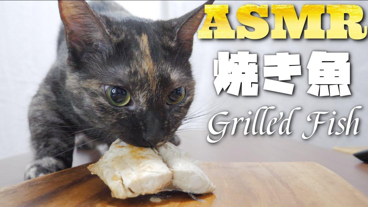 【ASMR】さわらをワイルドに唸りながら食べる猫の咀嚼音🐈🐟🎧