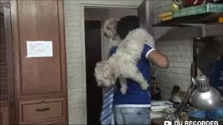 Fernanfloo fällt vom Stuhl 😂😂😂 (Fernan der Ungeschickte) Dayana_Amy Roblox