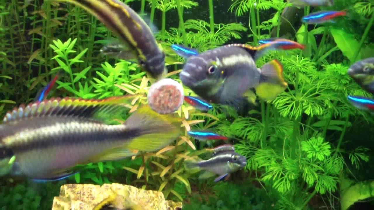 Resultado de imagen para peces acuario pastillas
