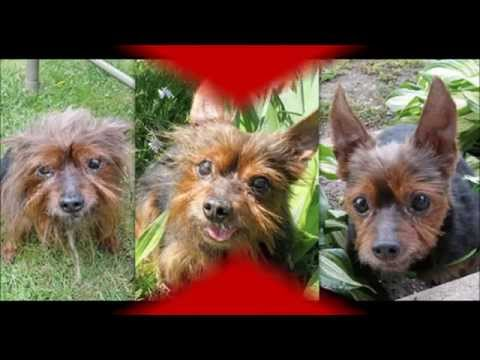 Dog Rescue : Rescued Dogs Before And After Amazing Transformation Dog Rescue
