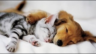Download Top 10 Cats and Dogs best friends Mp3 and Videos
