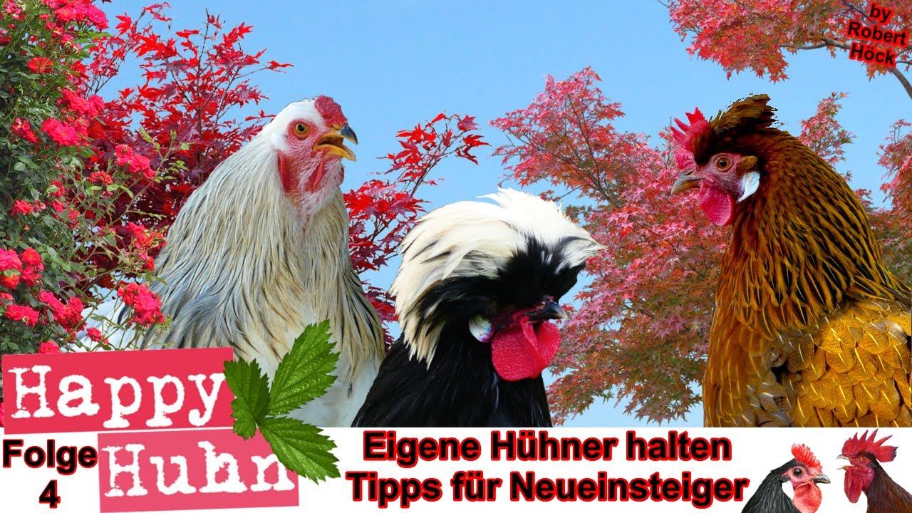Eigene Hühner halten - 10 Tipps für Neueinsteiger bei HAPPY HUHN - Hühnerhaltung für Anfänger E4
