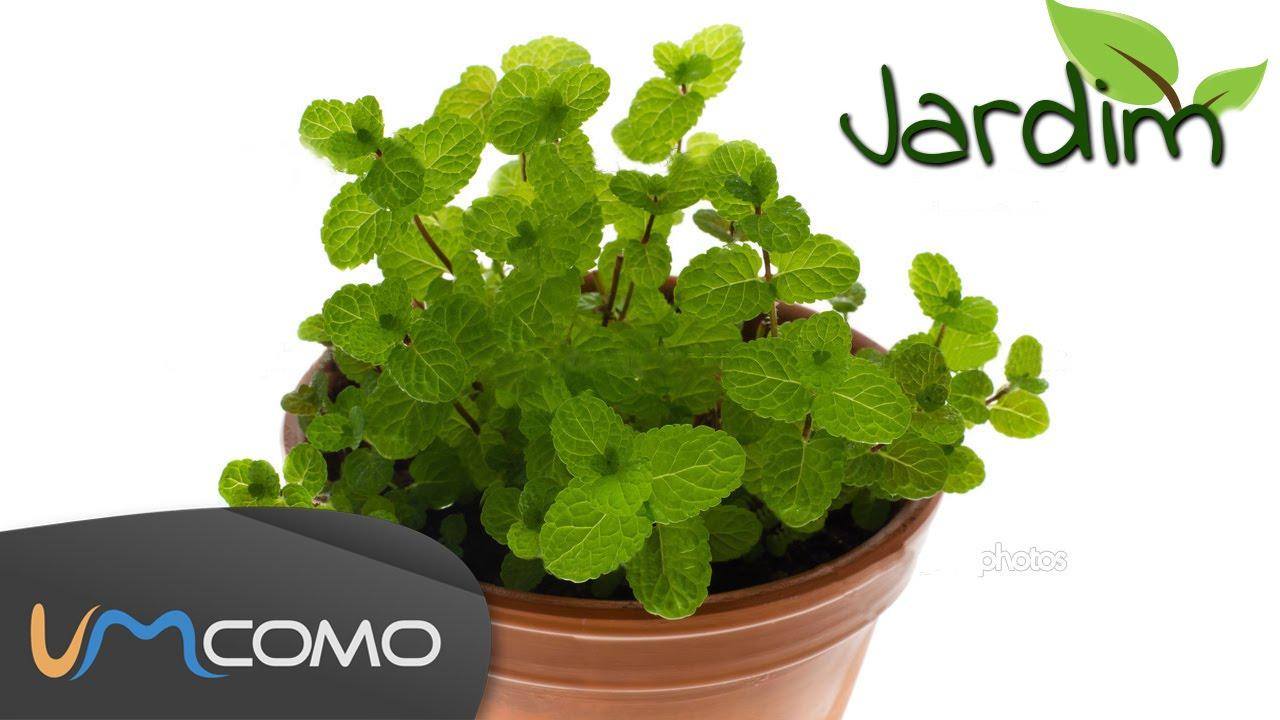 Plantar hortel pimenta ervas arom ticas youtube - Plantar hierbas aromaticas ...