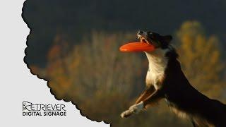 Digital Signage: Fetch Business Funny Dog Video
