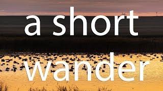 A Short Wander