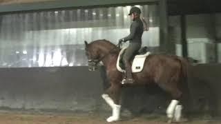 4 y stallion Governor Teneriffe