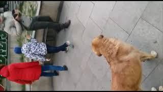 В  Грузии рай для собак