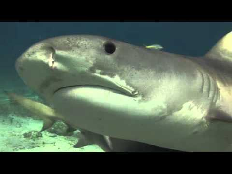 •+ Free Watch This is Your Ocean: Sharks