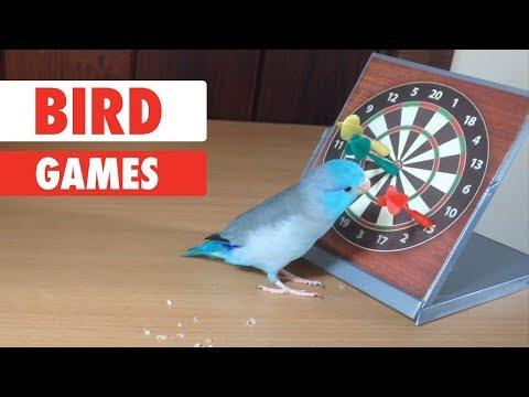 Bird Games | Smartest Birds Ever
